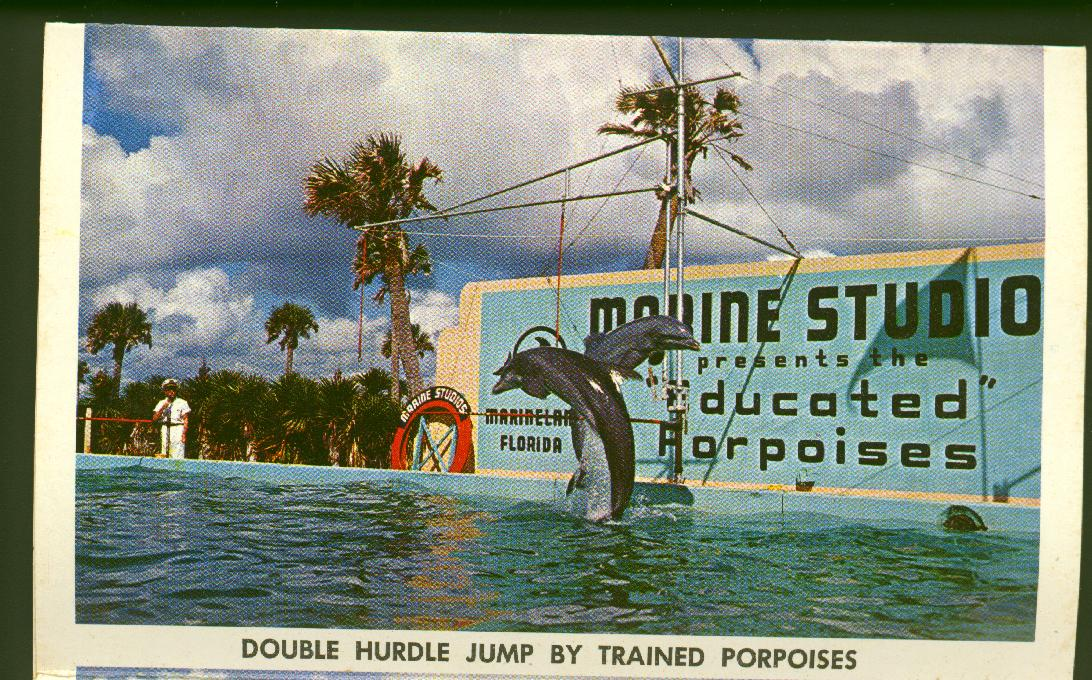 Double Hurdle Jump By Trained Porpoises